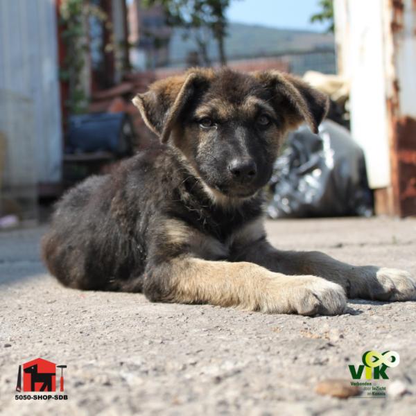 Buitenlandse hond