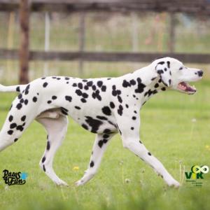 Hondenlijf: Balans en Gangwerk