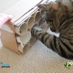 Hersenwerk in je Kattenwerk