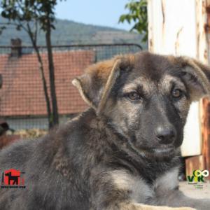 VIK Buitenlandse hond