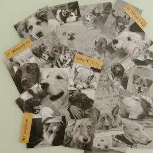 Lieve hond totaalpakket